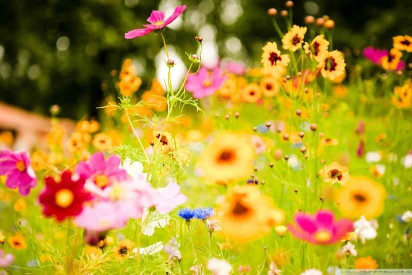 download spring flowers wallpaper 1920x1200 for samsung galaxy