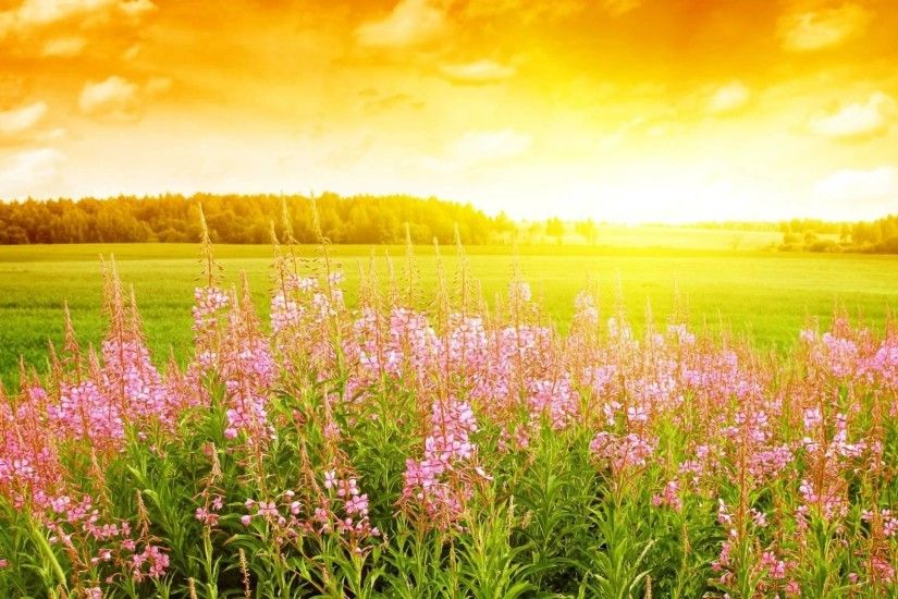 Summer Flower HD Wallpapers (4)