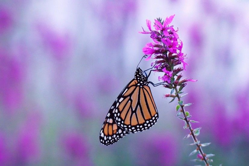 2048x1362px butterfly computer backgrounds wallpaper by Burnell Hardman