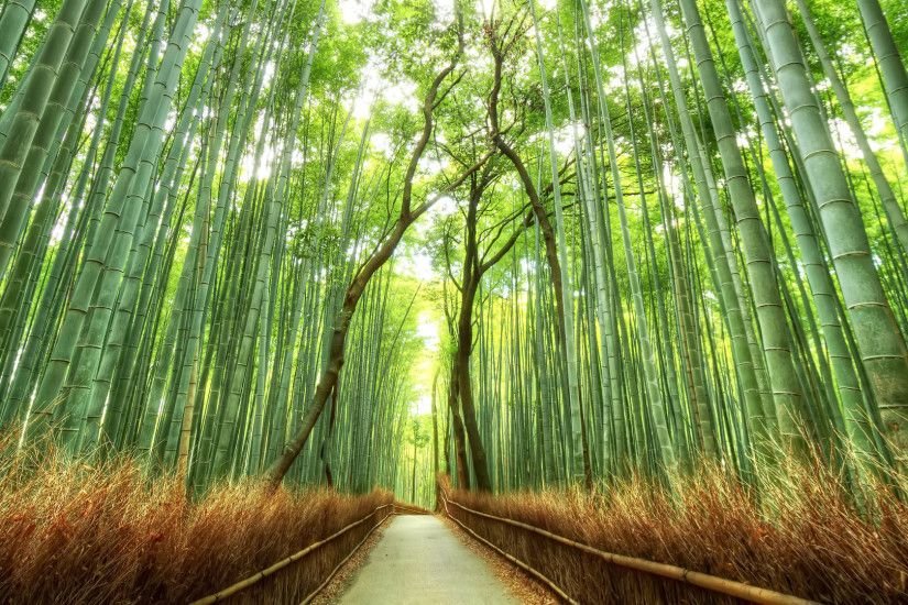 Forestsbridgesnaturalsceneryhdwallpaperbackgrounds1920x1080. Beautiful  Bamboo Forest Japan HD Desktop Wallpaper Background download