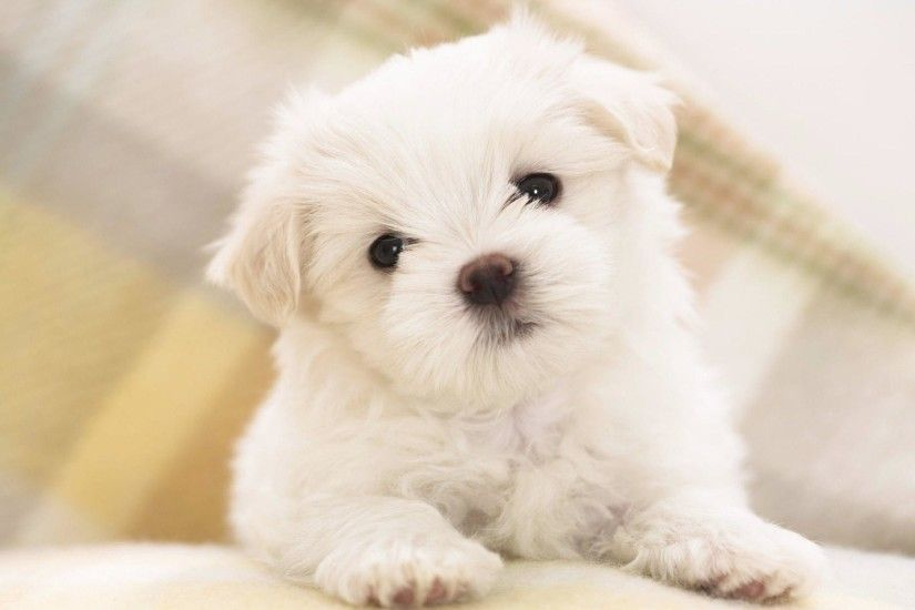 Wallpapers For > Cute Puppy Wallpaper