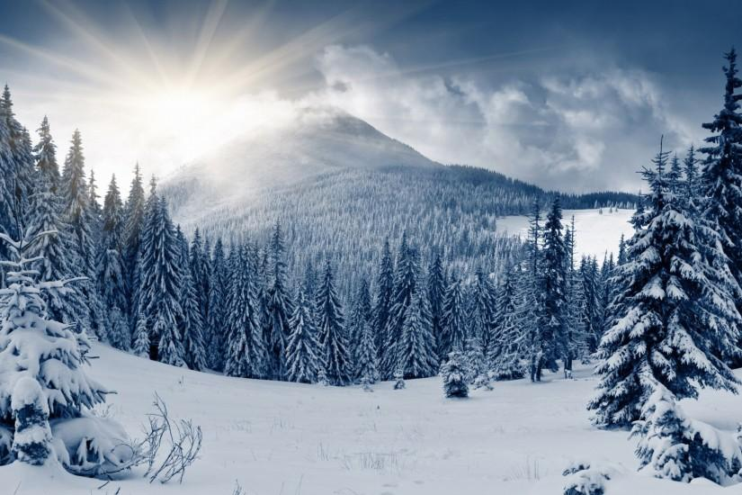 Sunny Valley Mountains Background Wallpaper HD Spruces In Winter Forest Mountains  Background Wallpaper HD