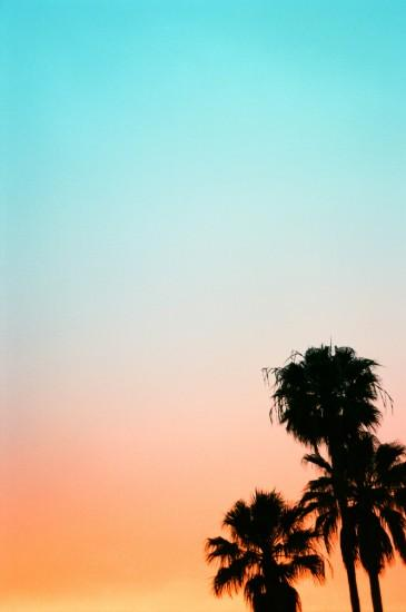 Pastel rainbow sunset and palm trees :) iPhone background