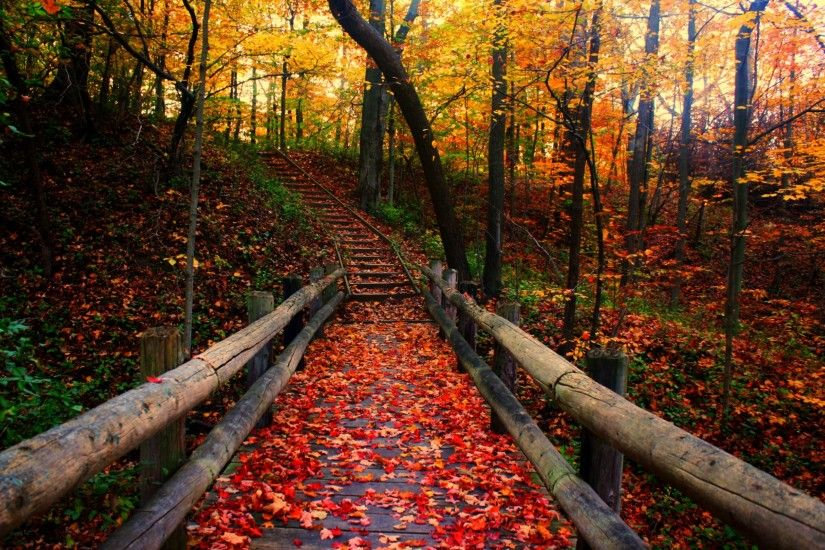 autumn-free-wallpaper-autumn-path_2560x1600_93197 | Jessica Sheets