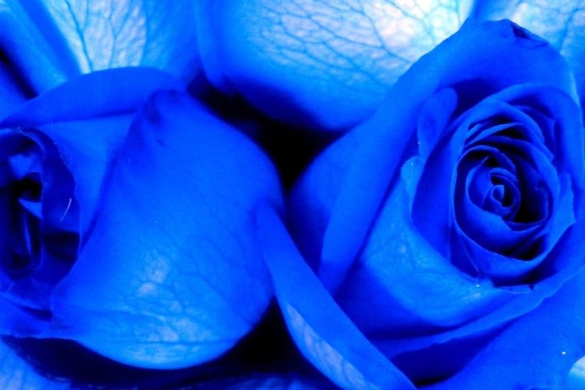 Blue roses. Very beautiful pictures (24 pics) - Izismile.com ...