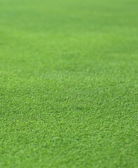 Stock photo of a perfect grass texture from a golf hole green