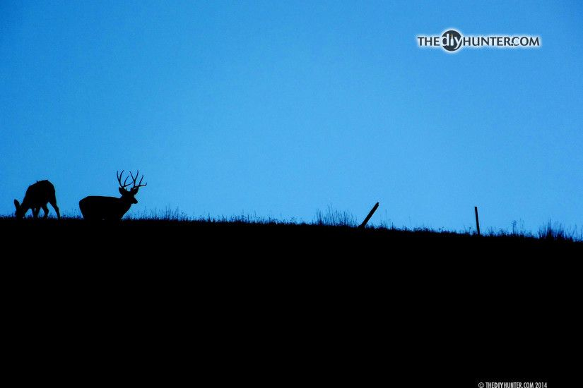 four point mule deer and doe on skyline ...