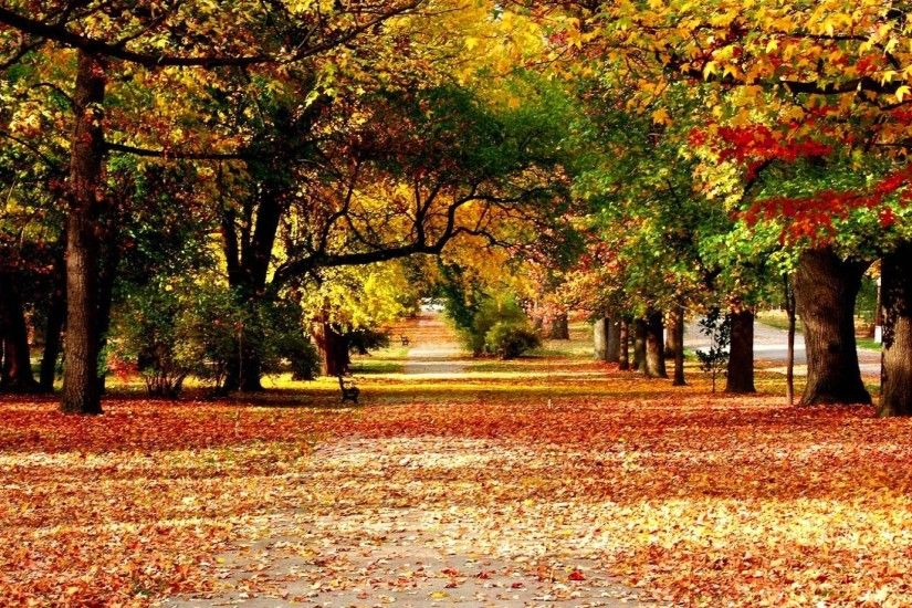 Hd autumn hd wallpapers 3D
