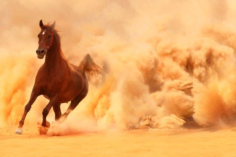 Arabian Horse Running Out Of The Desert Storm (click to view)