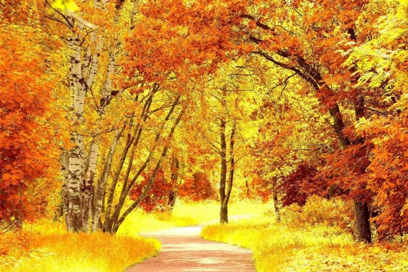 Wallpapers For > Fall Foliage Wallpaper
