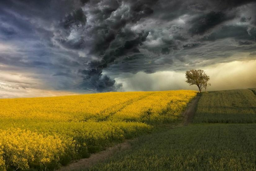 Blossoming field on a background of a Thunderstorm