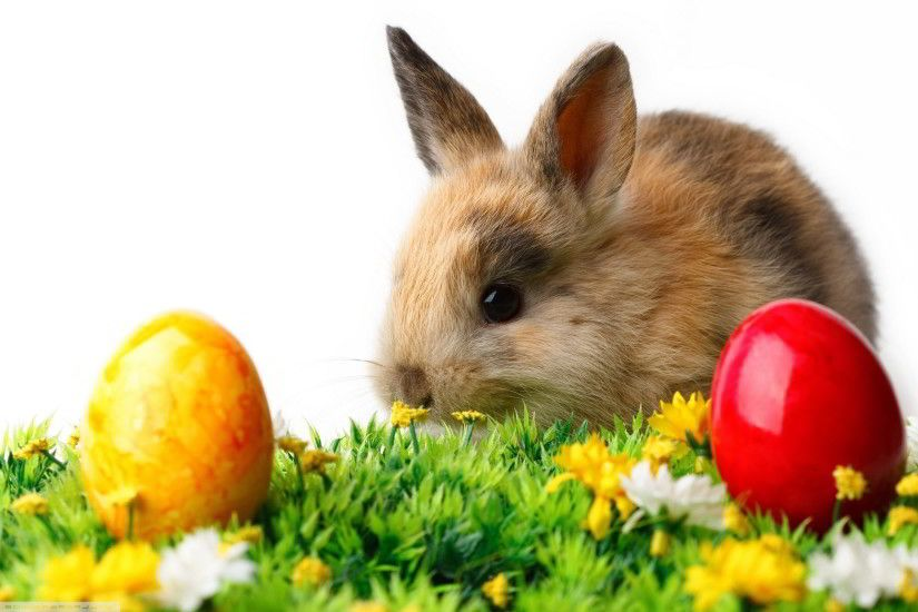2560x1600 Rabbit easter eggs Wallpapers | Pictures