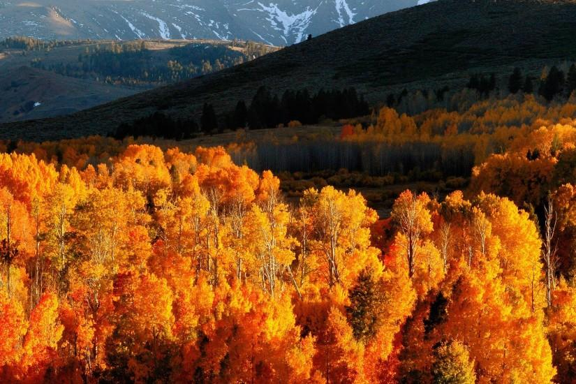 Preview wallpaper autumn, trees, gold, mountains, light, hills, slopes,