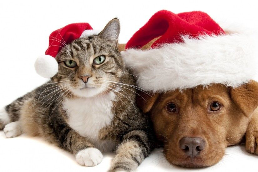 1920x1080 Wallpaper cat, dog, christmas hat