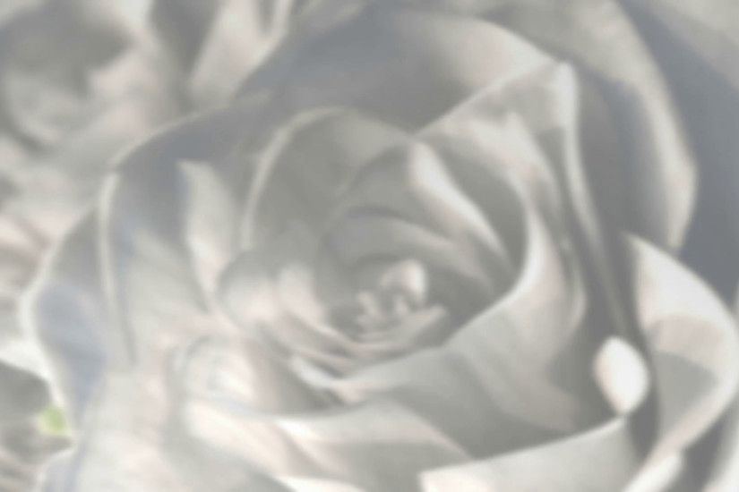 rotating white roses background theme - 3D render. seamless loop Motion  Background - VideoBlocks