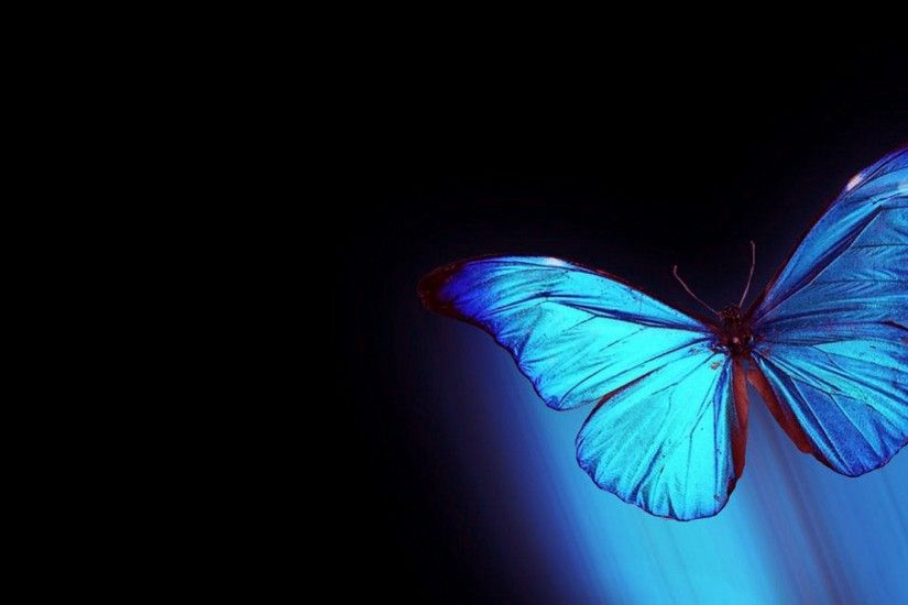 Blue Butterfly Wallpapers Background For Free Wallpaper