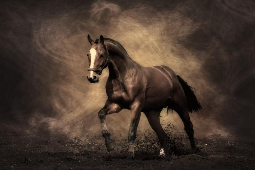 horse backgrounds 1920x1080 4K