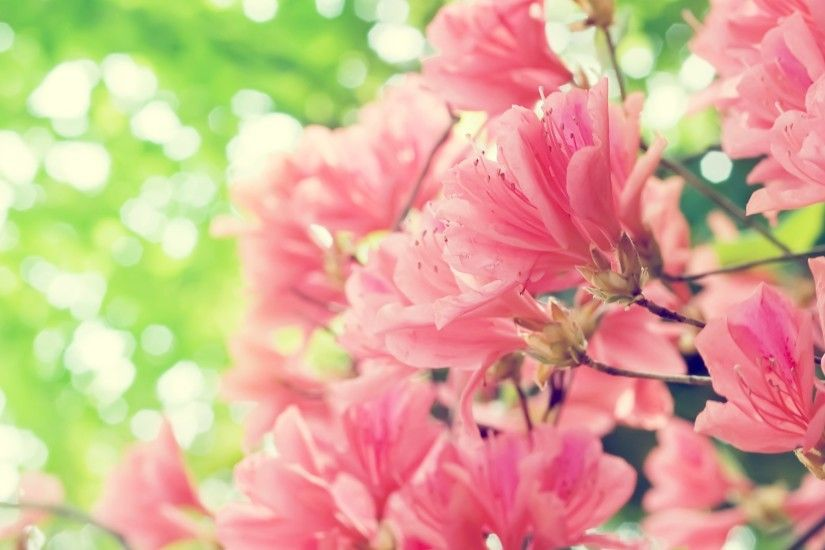 Pink Spring Flowers Wallpaper Background Flower