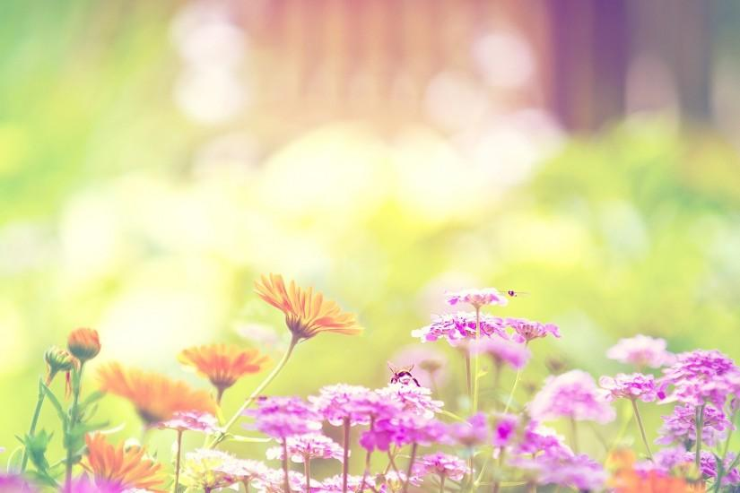 Daisies | Summer <b>wallpaper</b>, PopSugar and <b