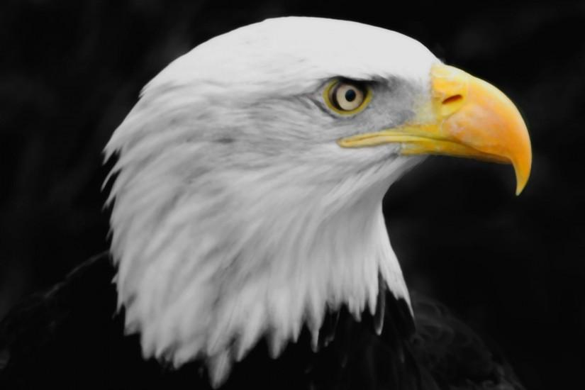 Eagle | Wallpapers HD free Download