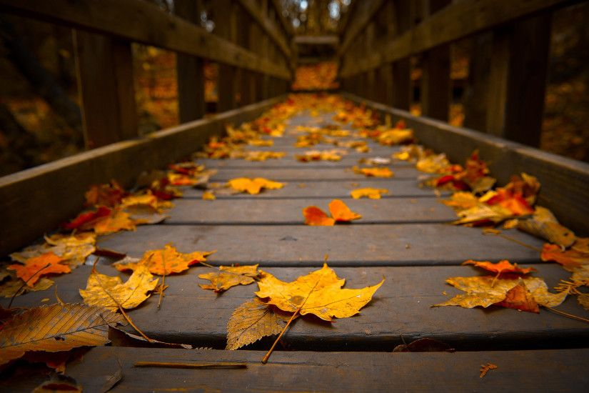 autumn bridge wallpaper. Â«Â«