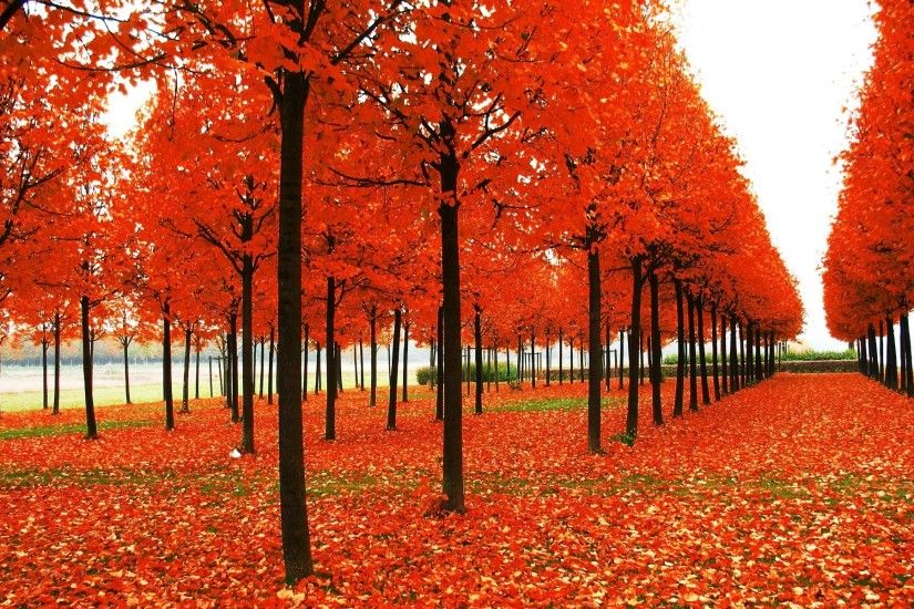 fall wallpaper background p p