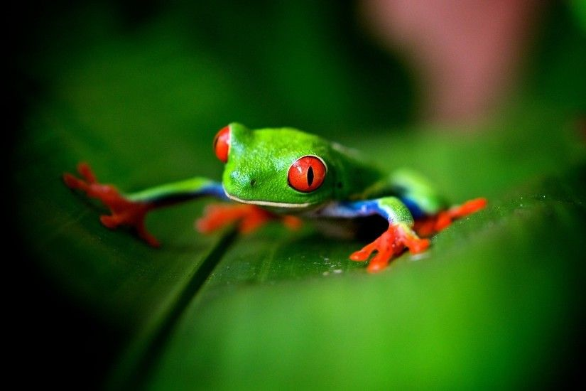Cute Frog Wallpaper High Quality Resolution
