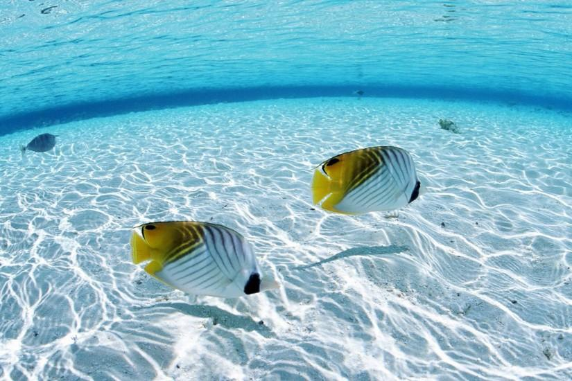 Images For > Tropical Fish Background