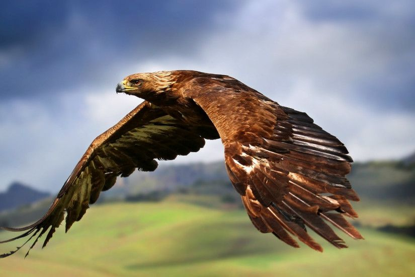 Flying Eagle Wallpapers For Mobile
