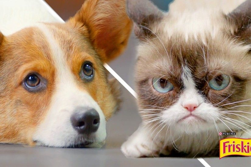 Popular Grumpy Cat Video – Choosing The Right Cat For You. Grumpy Cat Video  Wallpaper