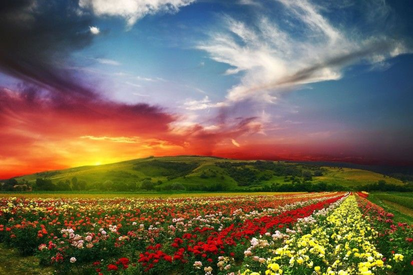 Flower Field Beautiful Landscape Wallpaper