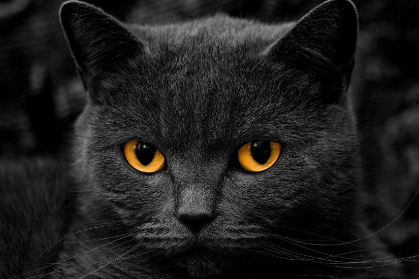 Awesome Black Cat Wallpaper 24147