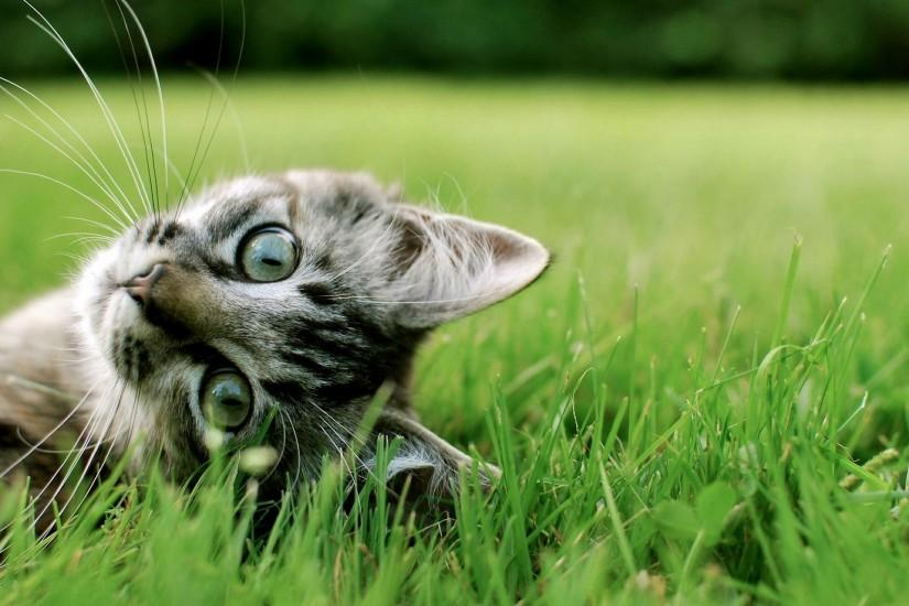 amazing cat background 1920x1080 free download