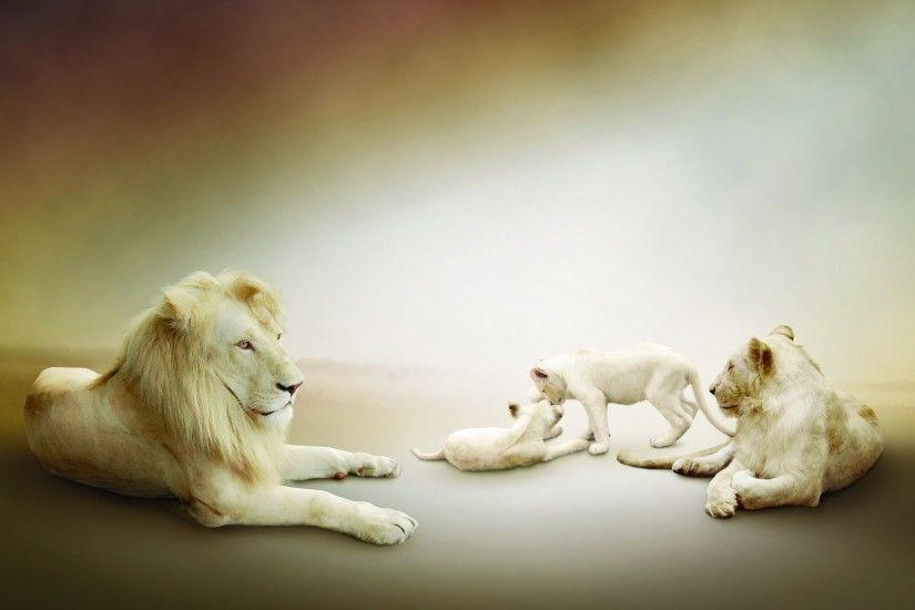 HD Wallpaper | Background ID:299992. 2560x1600 Animal White Lion