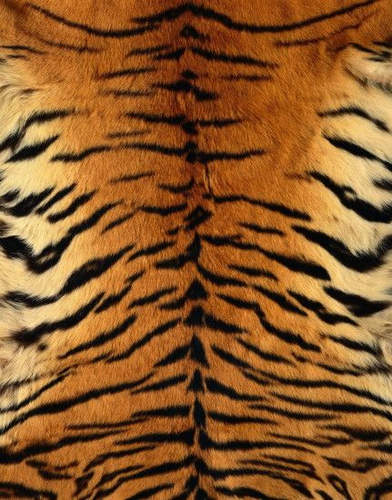 Free desktop wallpapers and backgrounds with Animal Patterns, animal skin,  pattern, striped, tiger. Wallpapers no.