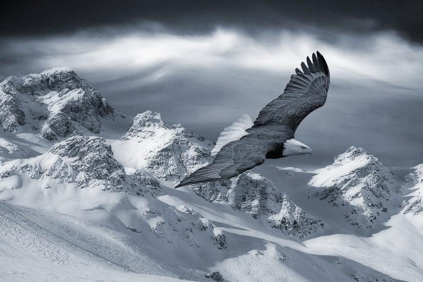 Preview wallpaper eagle, mountain, sky, snow, hills, birds, predators  1920x1080