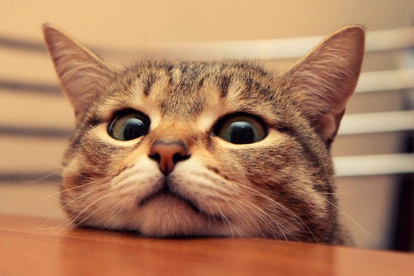Funny Cat Desktop Wallpapers Wallpaper