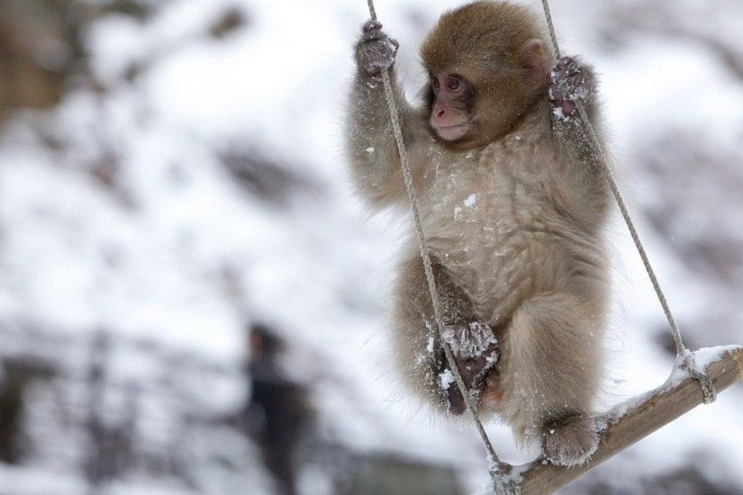 Fun Monkey Swing Snow Mood Animals Winter Baby Animal Pictures With Quotes  - 1920x1200