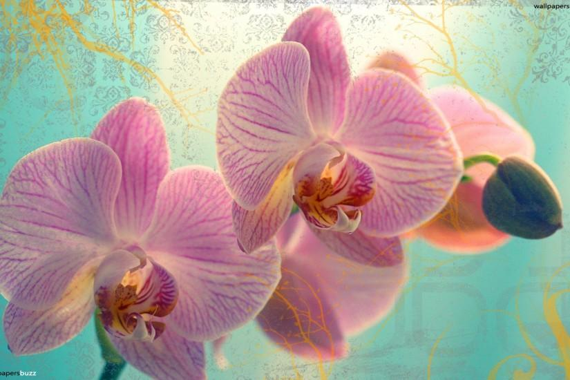Pink orchid in blue background