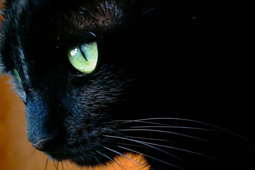 Black cat with green eyes close up wallpapers and images - wallpapers .