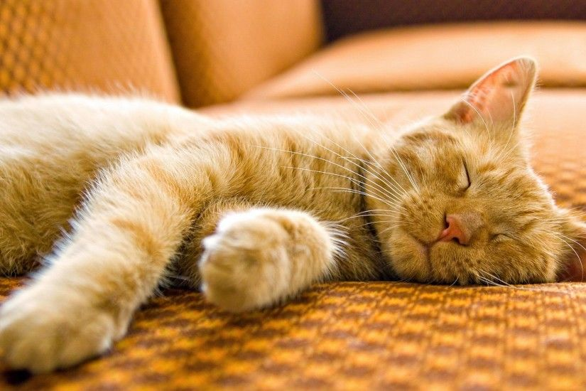 Sleeping Cat Backgrounds