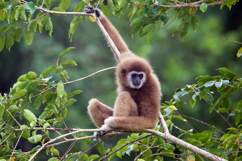 ... Top 25 most beautiful monkey photos HD in the world