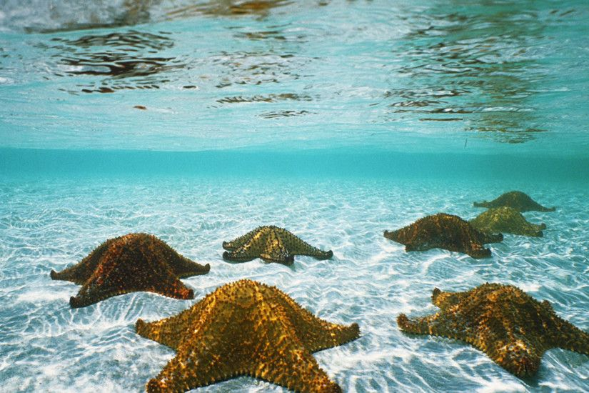 Starfish Under The Sea. Starfish Under The Sea Desktop Background