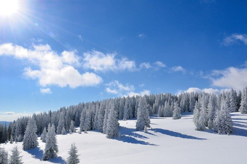 Amazing bright sun over the snowy forest wallpaper 1920x1080 jpg