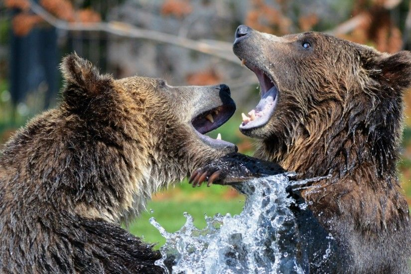 1920x1080 Wallpaper bears, grizzly bear, sparring, spray