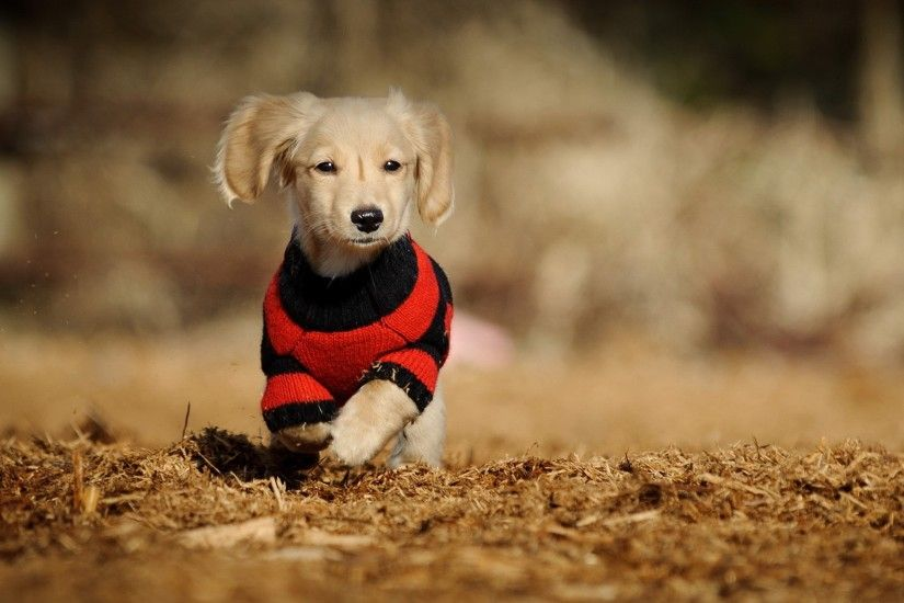 Cute Dogs Wallpaper 6327