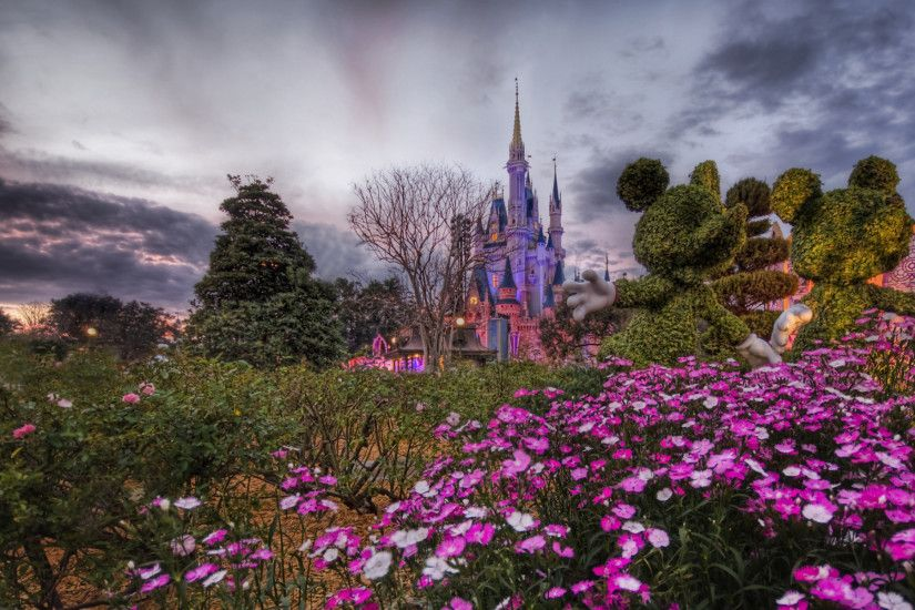 Disney World Flower Desktop Wallpaper