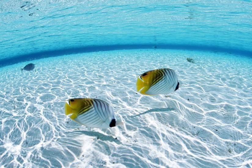 Gold Fish Beach HD Desktop Wallpaper #3645 | HD Wallpaper & 3D Desktop .