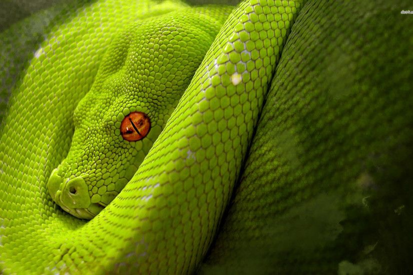 Snake Awesome Wallpapers