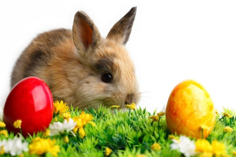 25 best ideas about Easter bunny images on Pinterest | Easter .